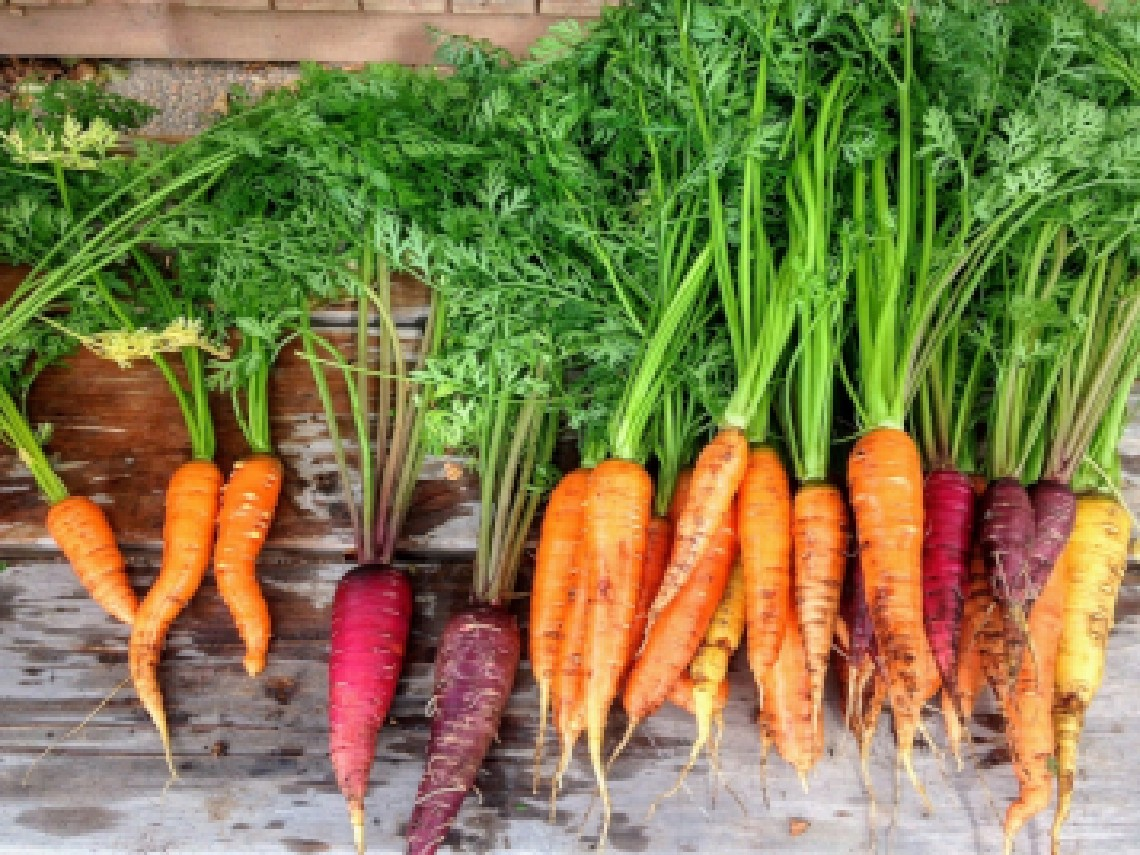 Not All Carrots Are the Same! Money and Motivation